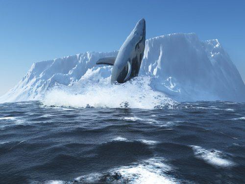 Синий кит из воды на фоне айсберга