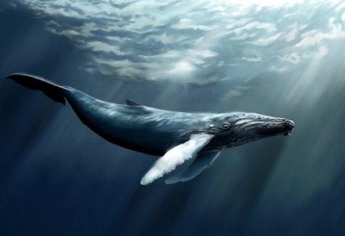 Синий кит графический