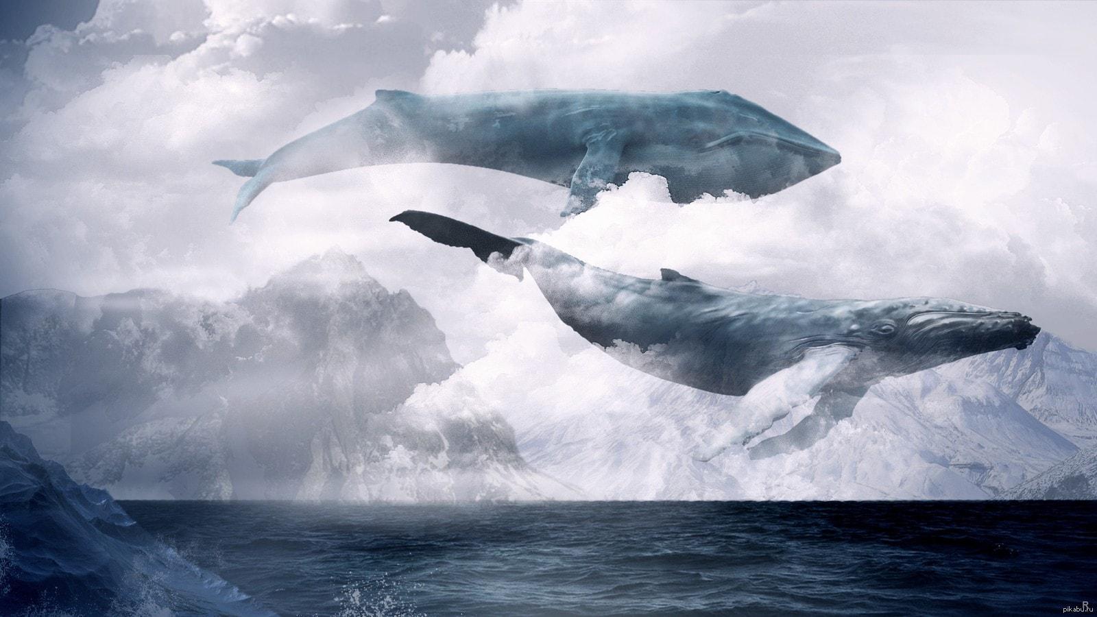 изображение киты в небе фото конце