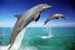 Прыжок дельфина
