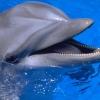Сколько хромосом у дельфинов? Сравниваем с другими обитателями моря