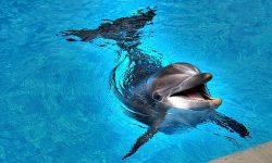 Дельфин выныривает