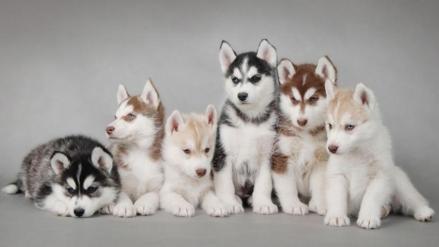 Сколько хромосом у собаки