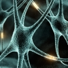 Сколько хромосом в соматических клетках человека, их виды