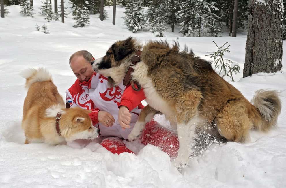 сколько собак у путина