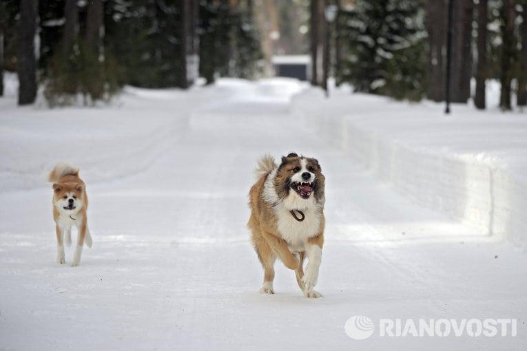 Собака Путина бежит