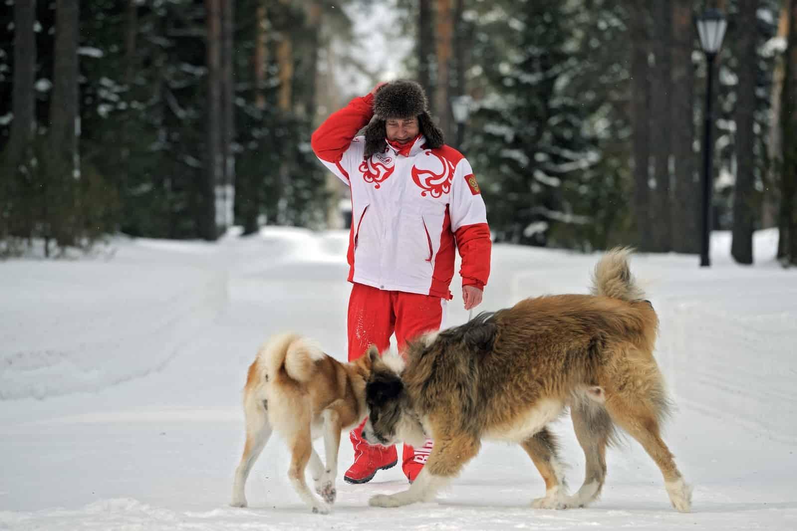 Путин в ушанке и с собаками