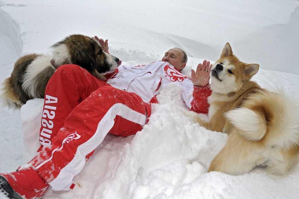 Путин лежит на снегу с собаками