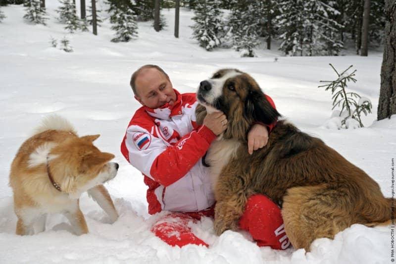сколько собак у путина на фото две