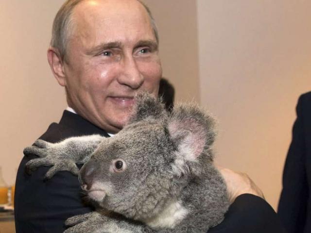 Путин держит в руках коалу