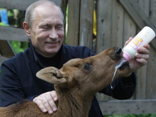 Путин кормит теленка из бутылочки