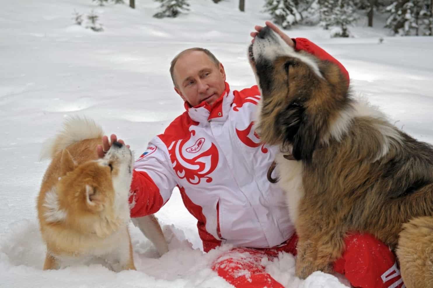 Путин Владимир Владимирович с двумя собаками