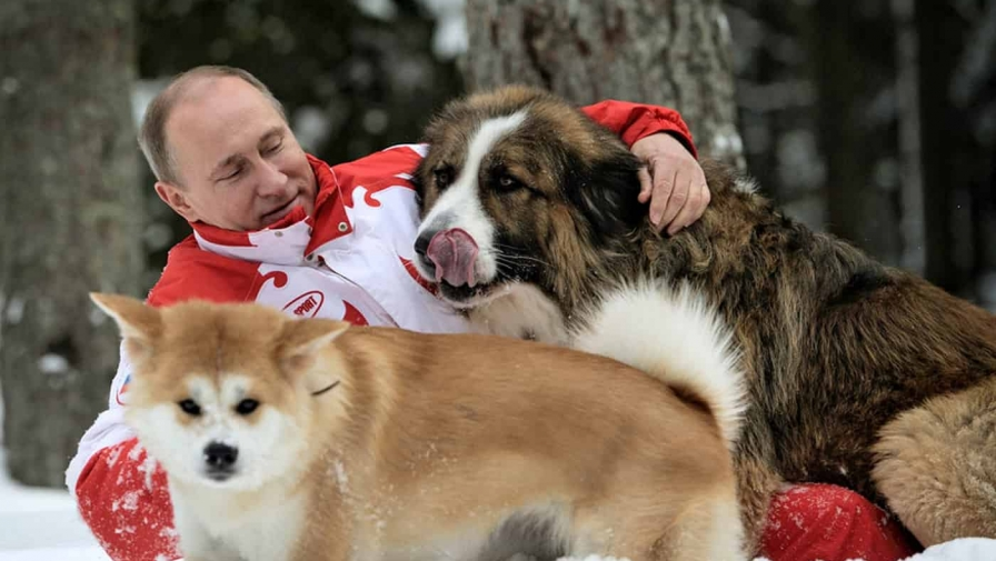 Сколько собак у Путина В.В. в 2017 году, фотографии и видео