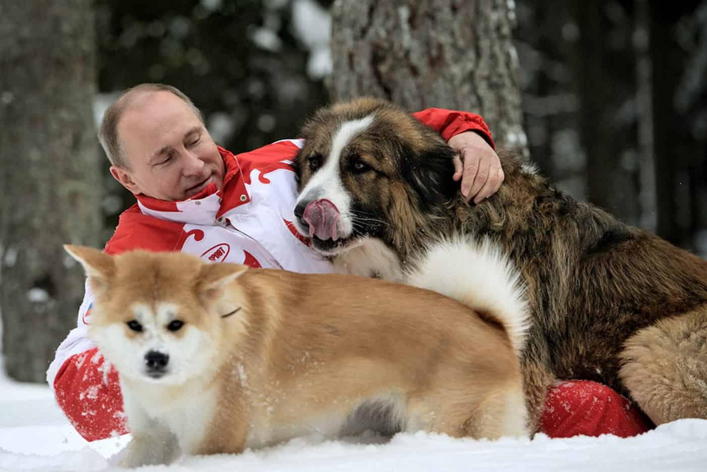 Путин обнимает собак