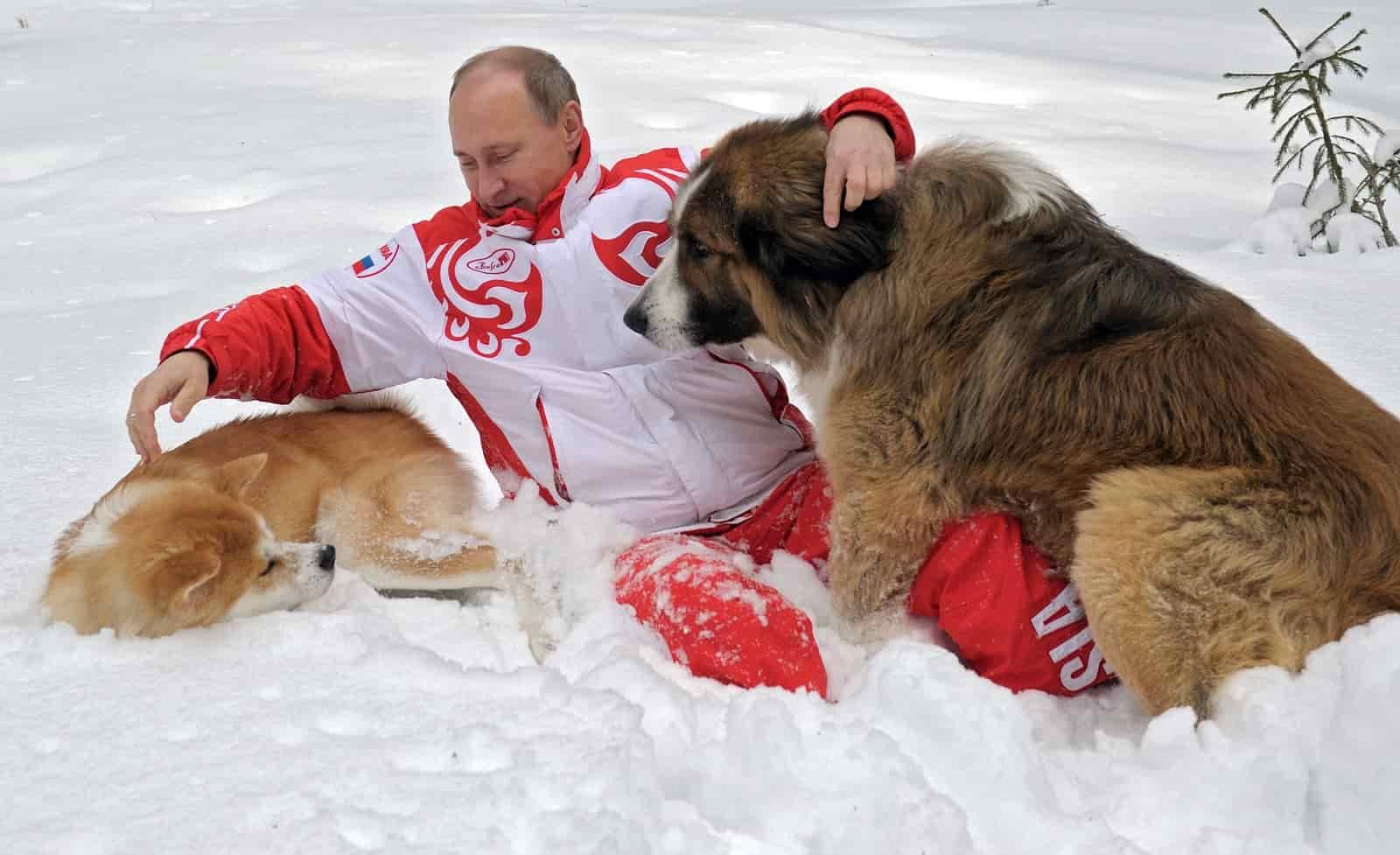 Путин сидит на снегу со своими собаками