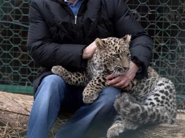 Путин держит леопарда