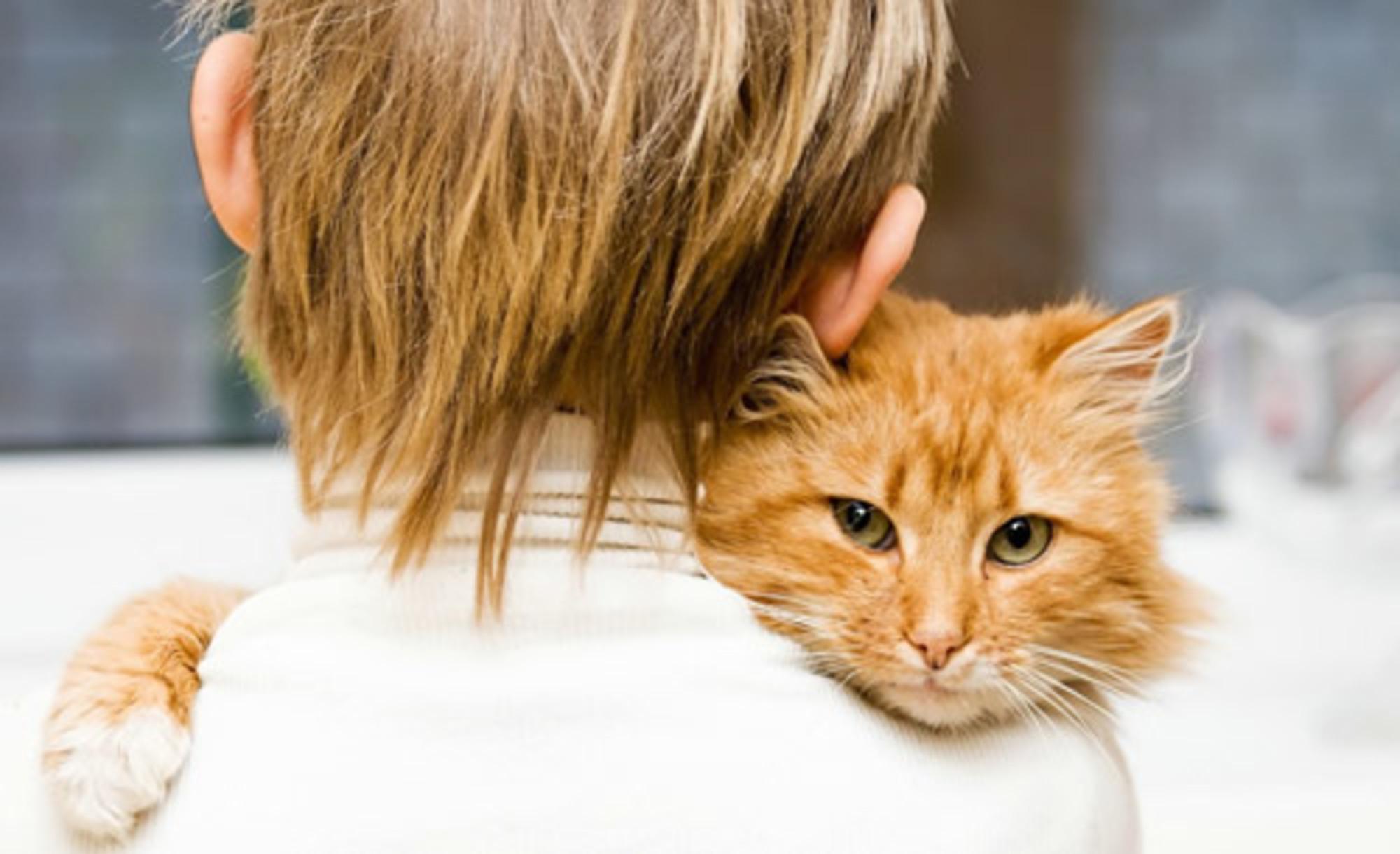 Сколько лет кошке по человеческим меркам: определяем возраст любимого питомца