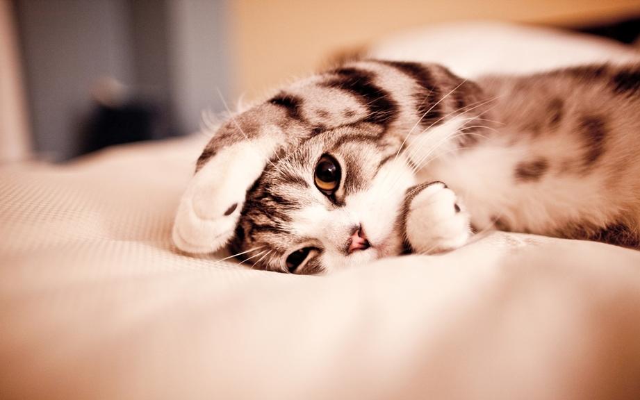 сколько живут кошки в домашних условиях