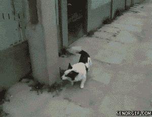 умный пёс гифки про животных