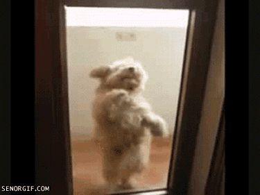 собачка прикольно танцует гиф