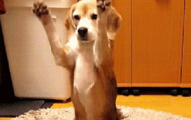 пёс ловит мяч