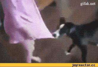кот защитил от пса