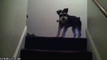 пёс актёр