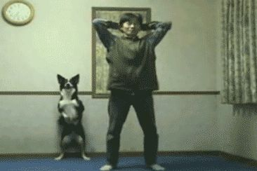 Фитнес зал для пса