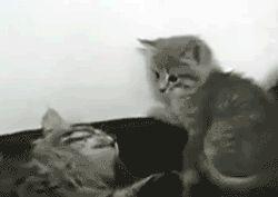 бой котов милый гифки анимация