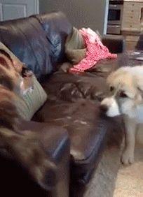 кот атакует пса смешное видео