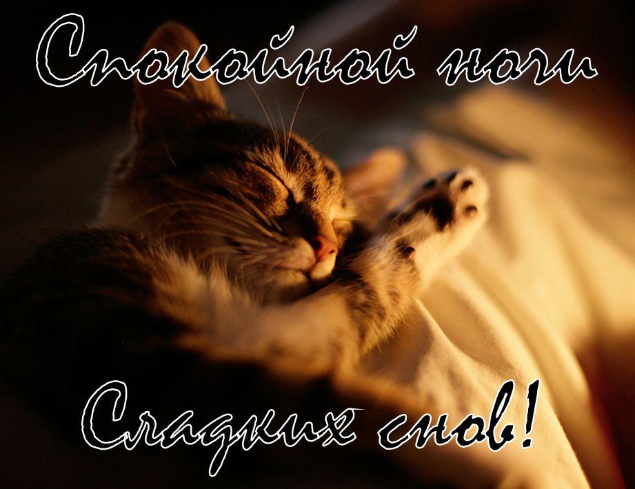 Доброй ночи картинки красивые для девушки котята