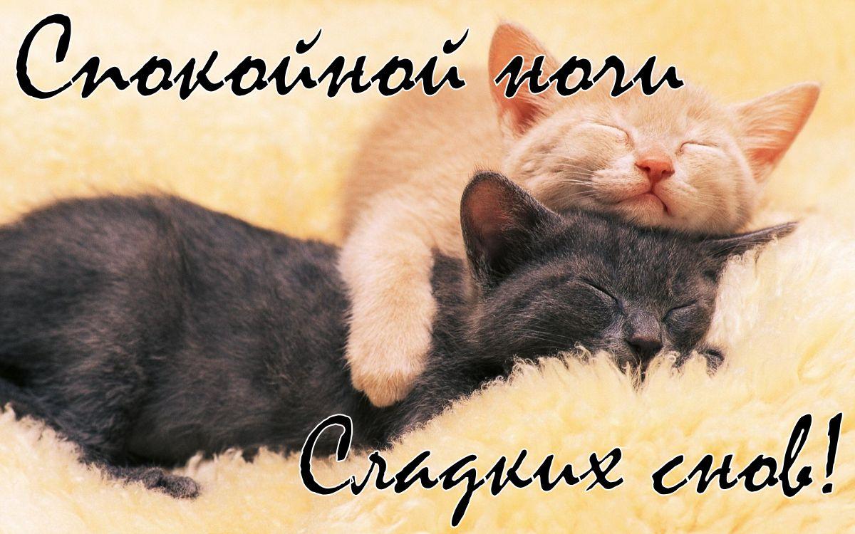 Картинки сладких снов прелесть
