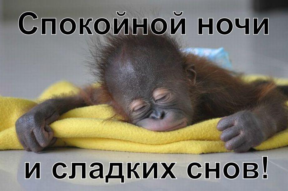 Спокойно ночи приколы картинки, днем