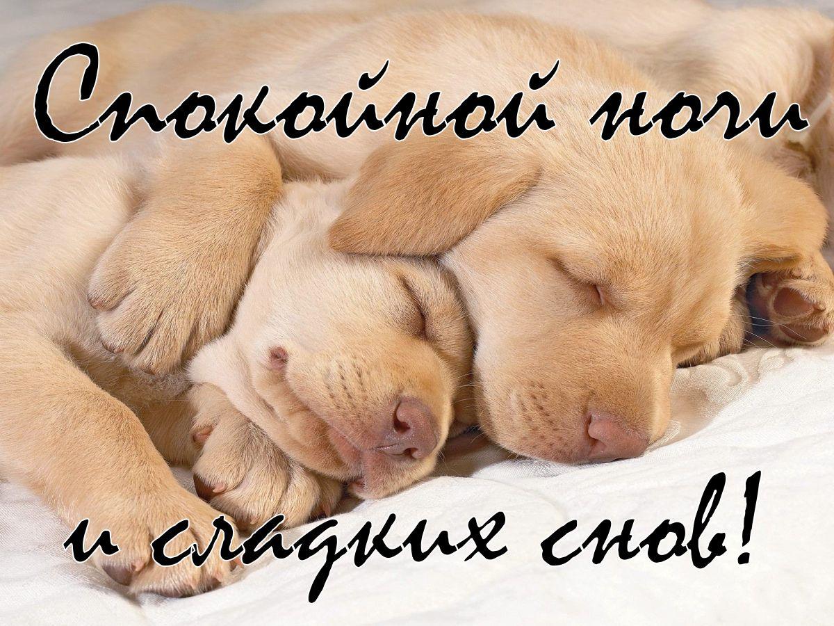 Картинки с прикольными собачками спокойной ночи приятных снов, февраля