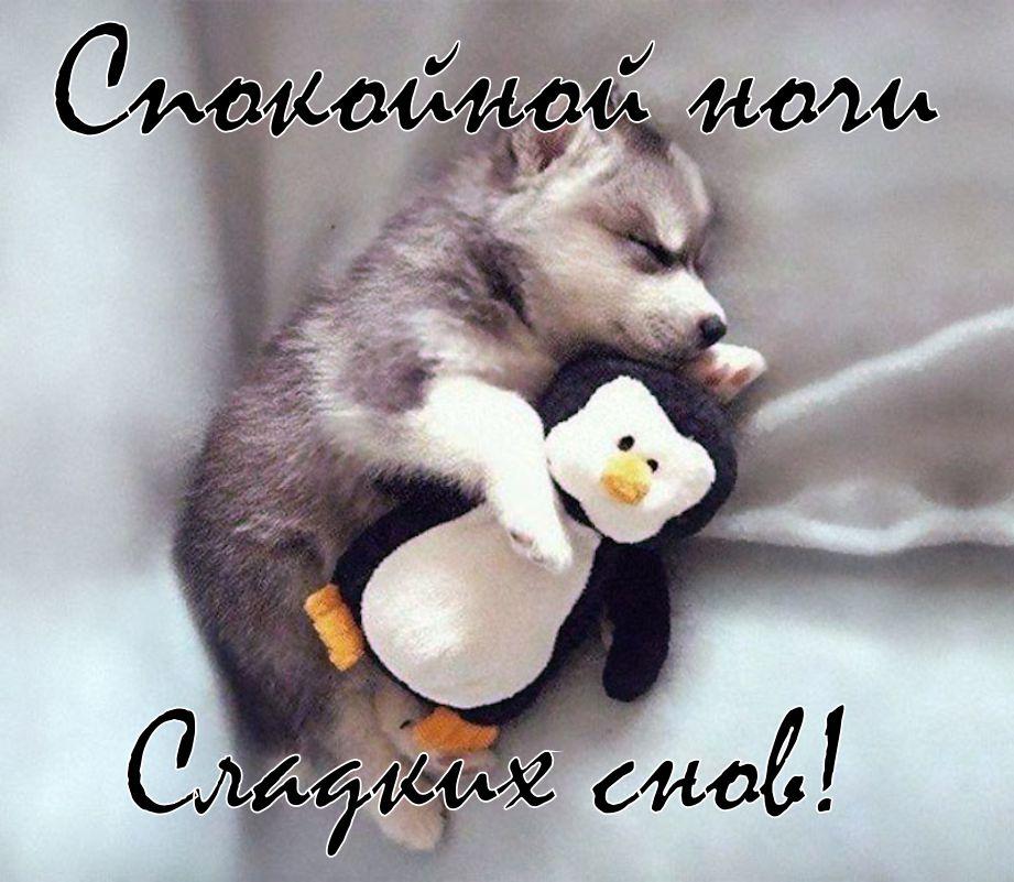 Красивые и смешные картинки спокойной ночи, курбан-байрам русском 2019