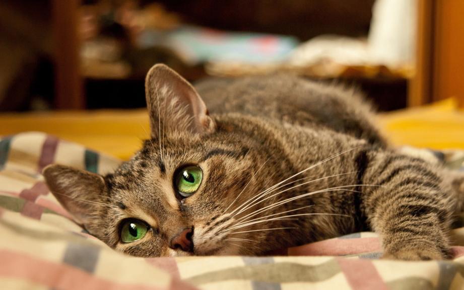 Таблетки от глистов для кошек: какие бывают и как безболезненно дать их питомцу