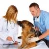 У собаки глисты, что делать? Виды, симптомы, лечение, профилактика.