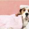У собаки температура не в норме, что делать? Советы ветеринара