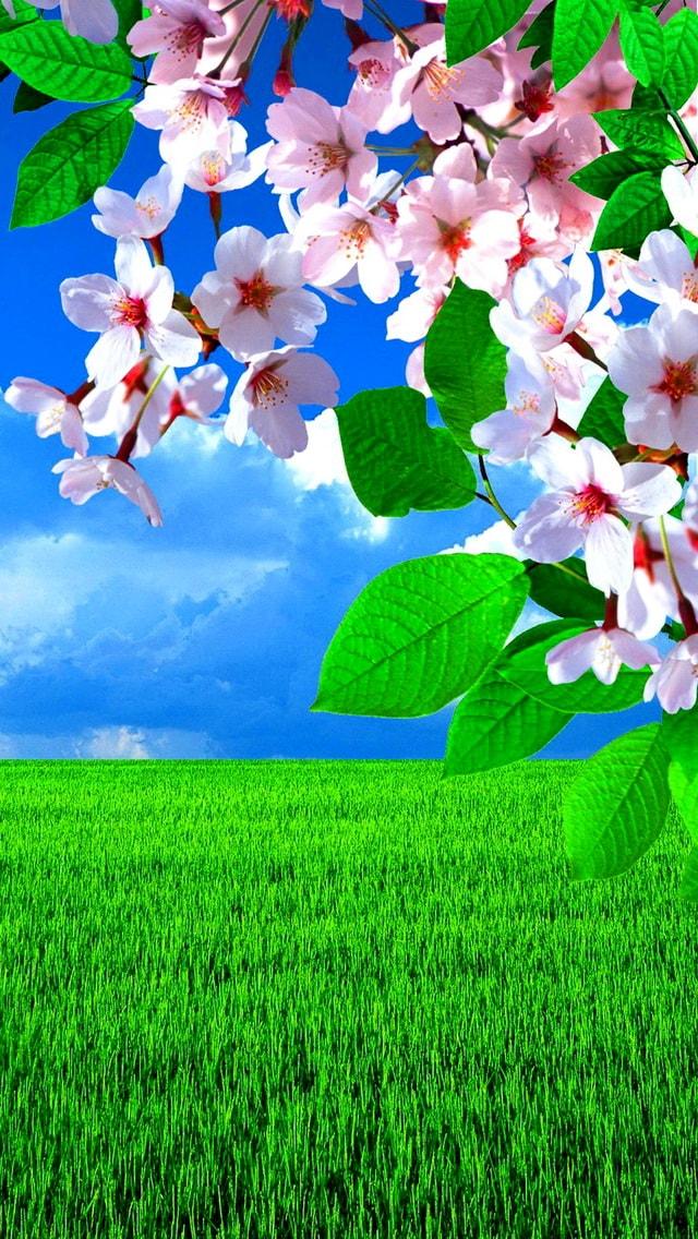 Весна. Красивые картинки на телефон. Скачайте бесплатно!