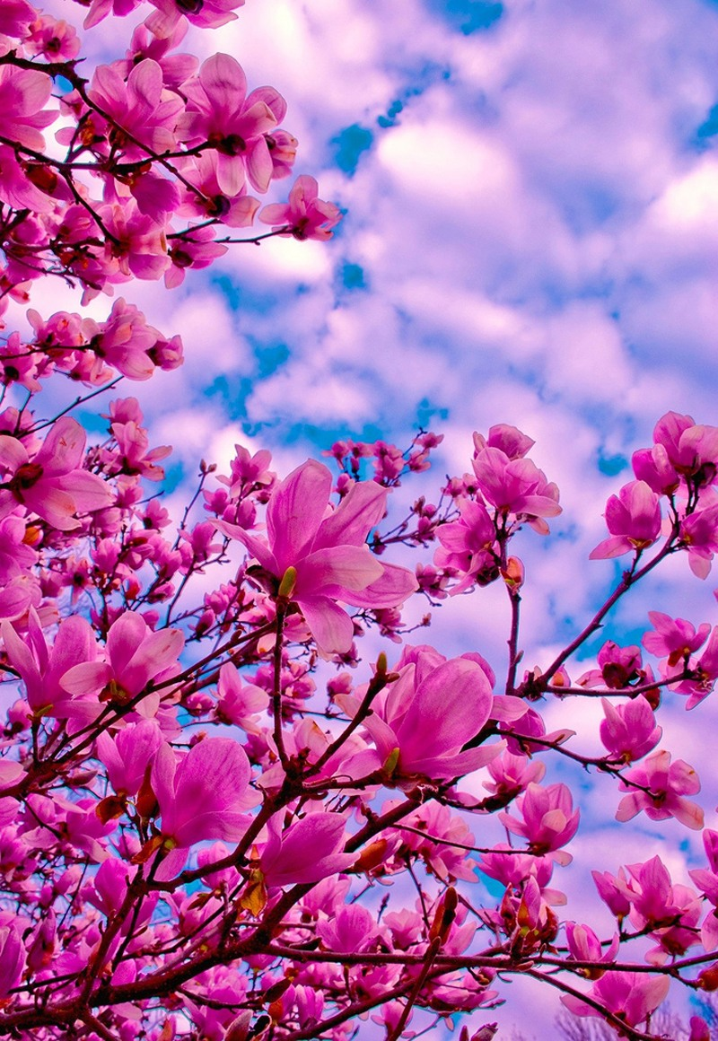 основном, дерева, фотообои на телефон весна думает такой стану