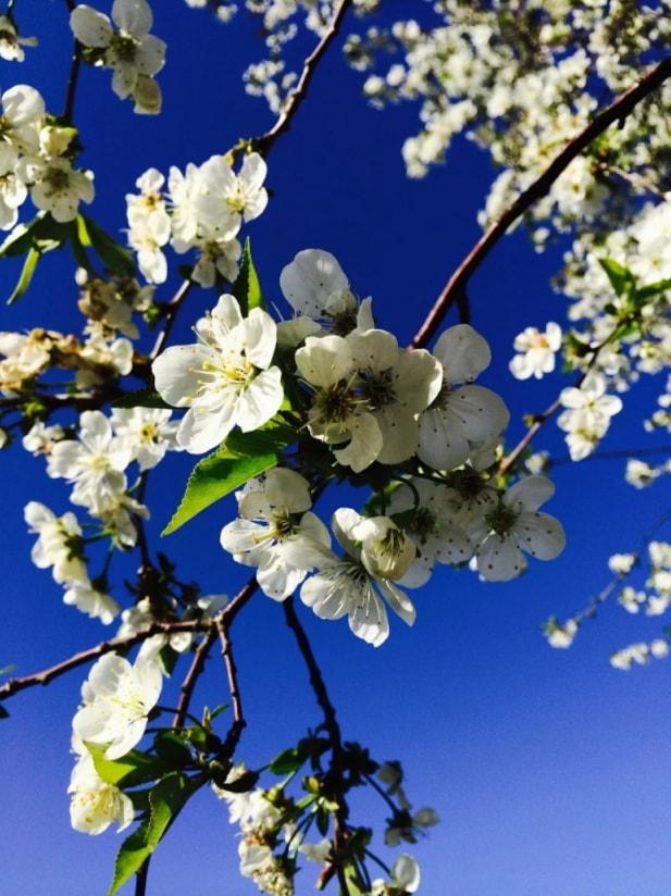 меня рабочие красивые картинки с весной для телефона сделать закладку