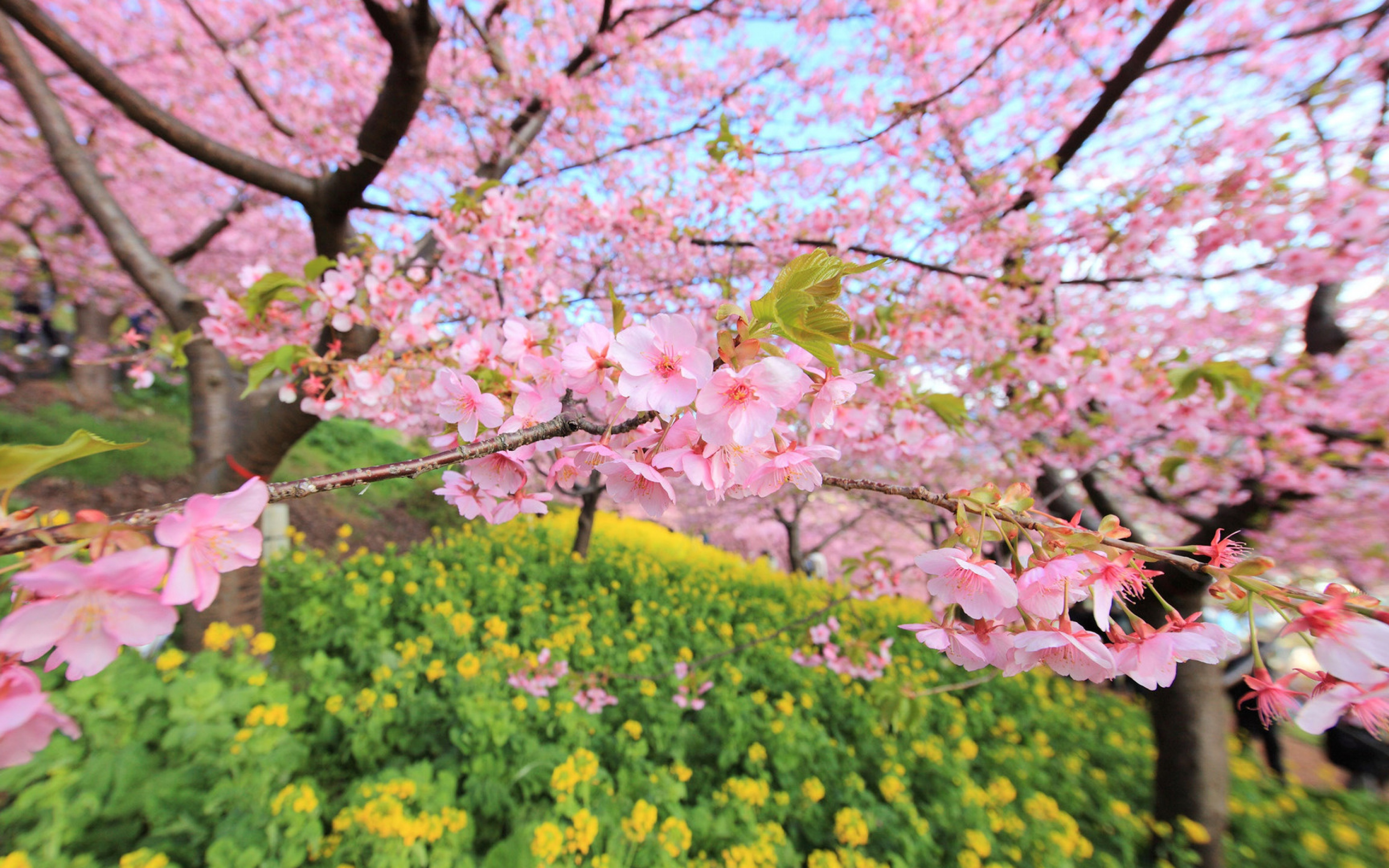 spring wallpaper for computer - HD1600×900