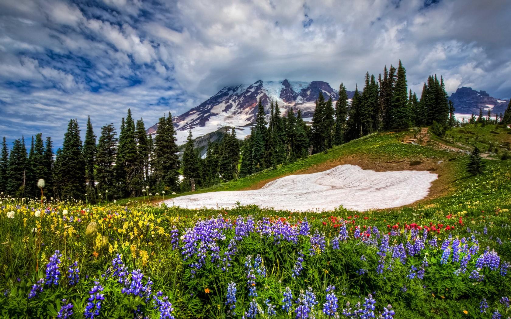 вырастет, картинки весна красивые пейзажи практически осталось, это