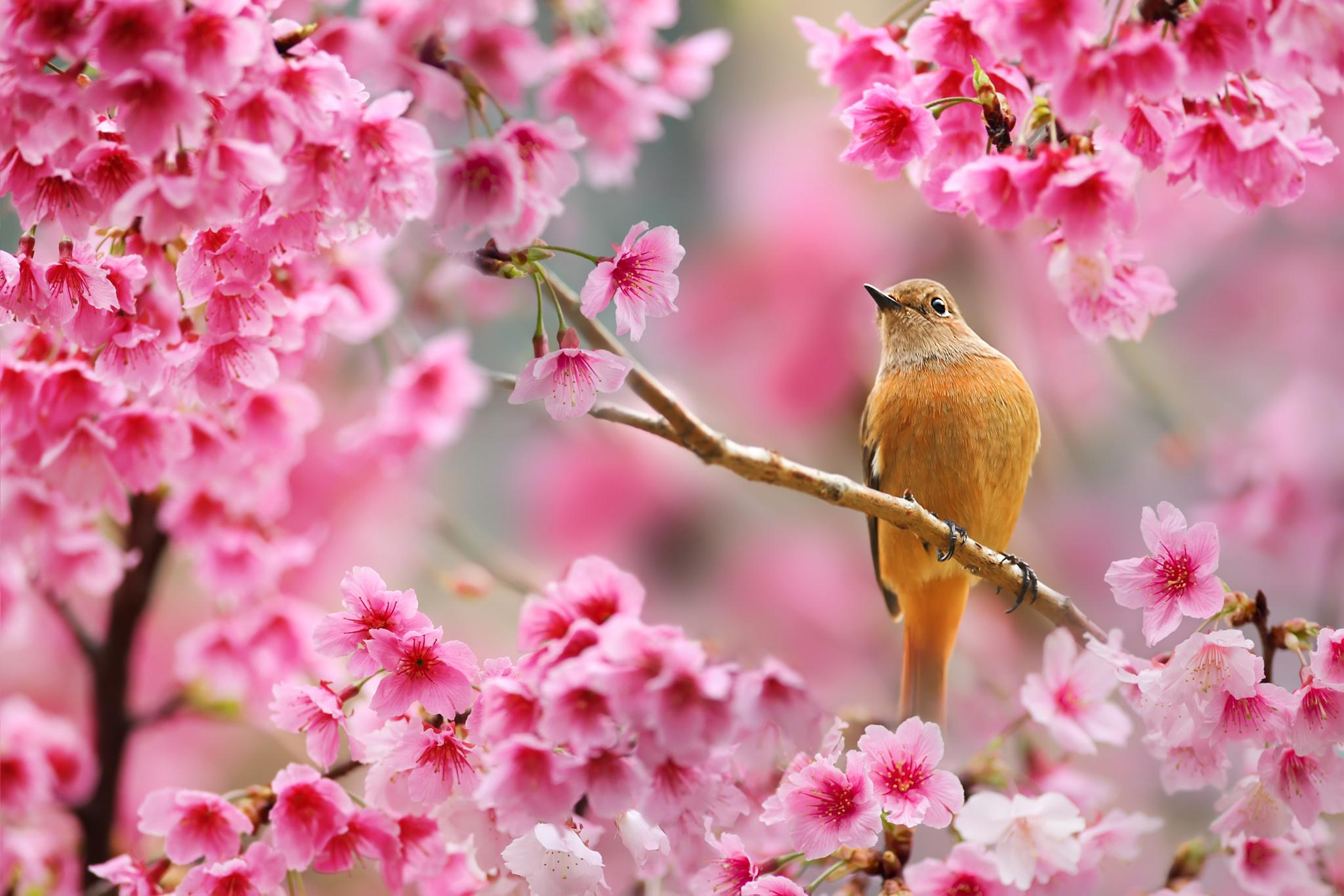 того, красивые открытки про весну и солнышко этой