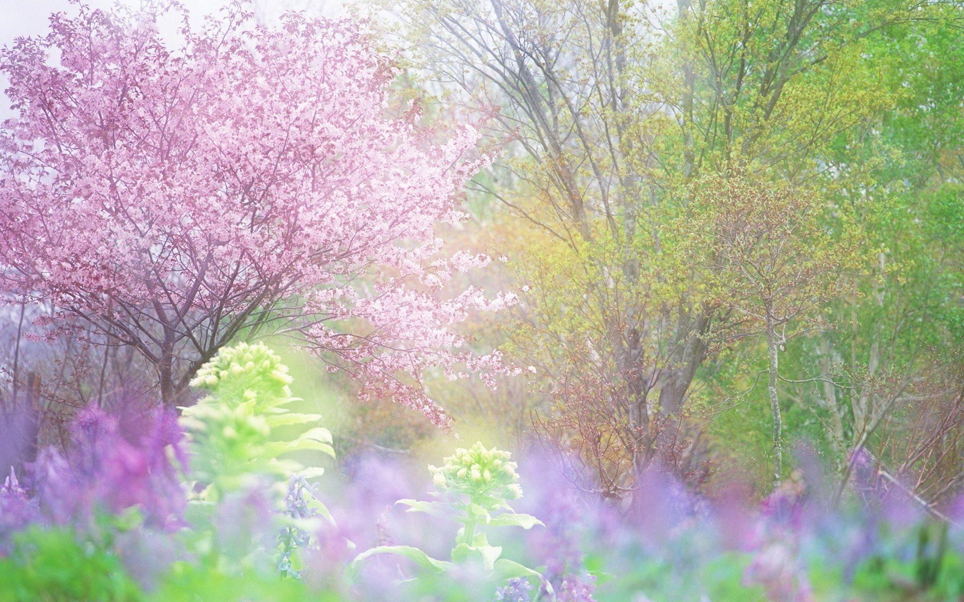 картинки про весну красивые для презентации наслаждения