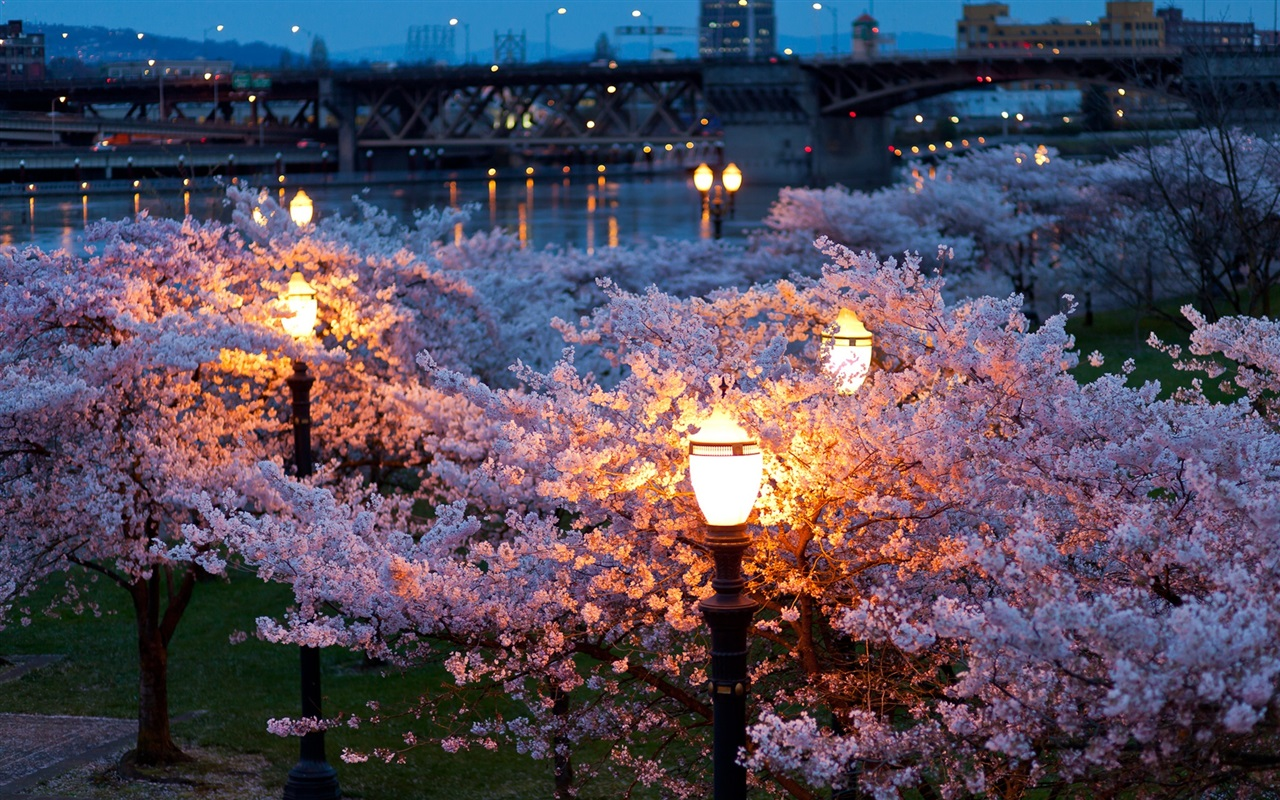 многолетнее красивые картинки весенние цветы в ночи ориентирует