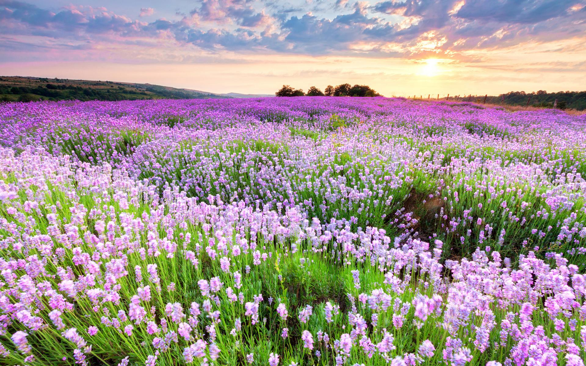 Поле цветов фото картинки