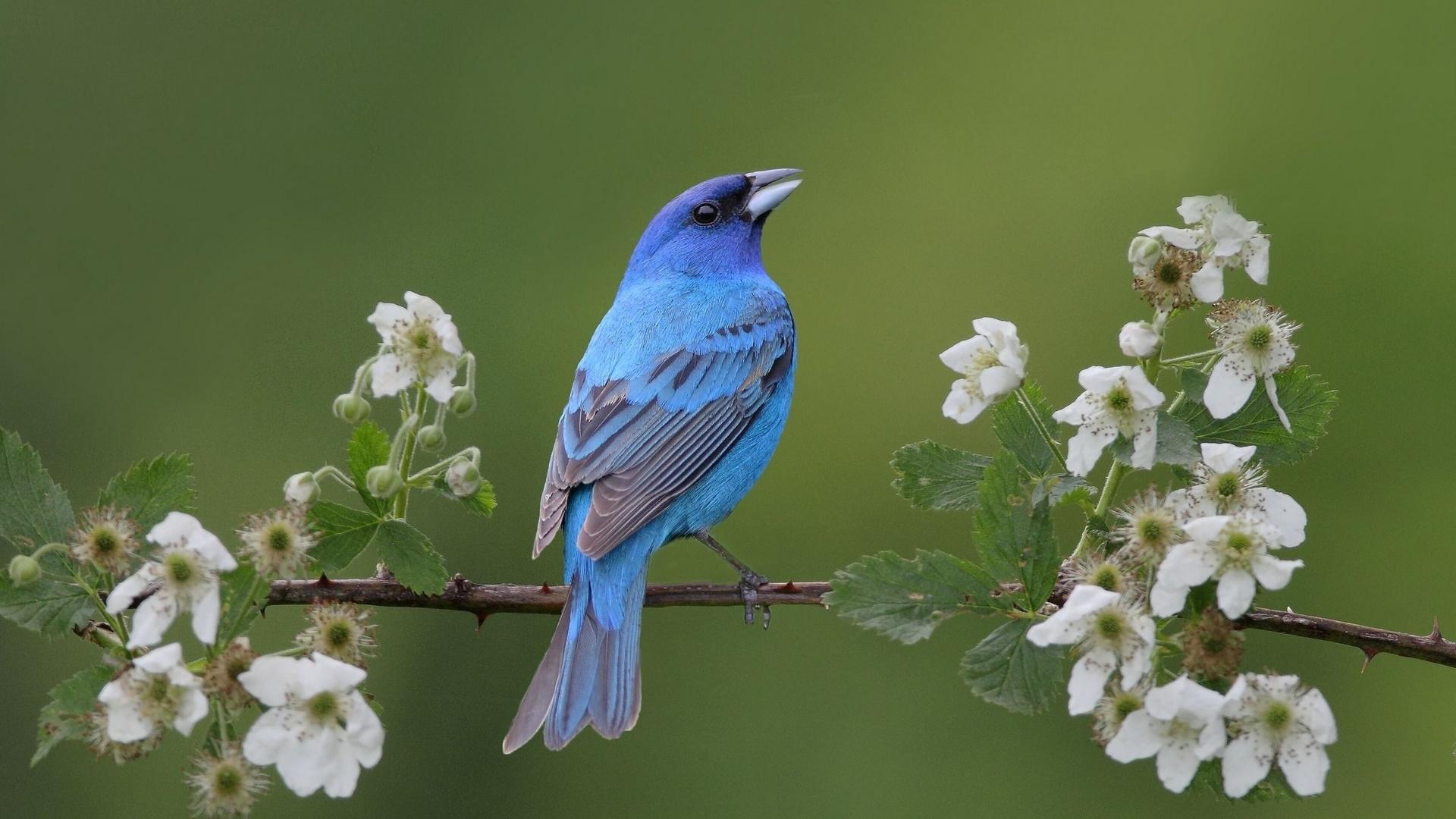птицы картинки широкоформатные что, судя
