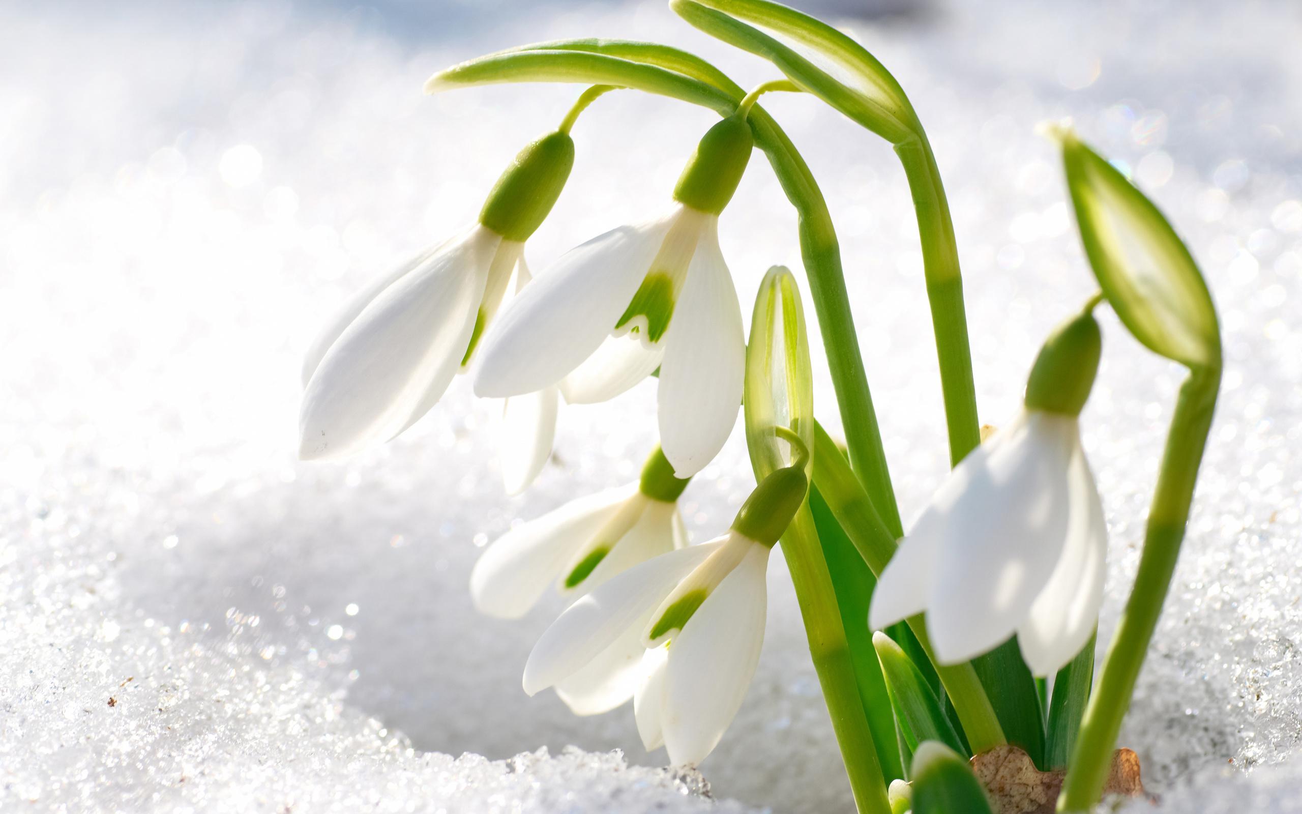 Картинка с природой весны