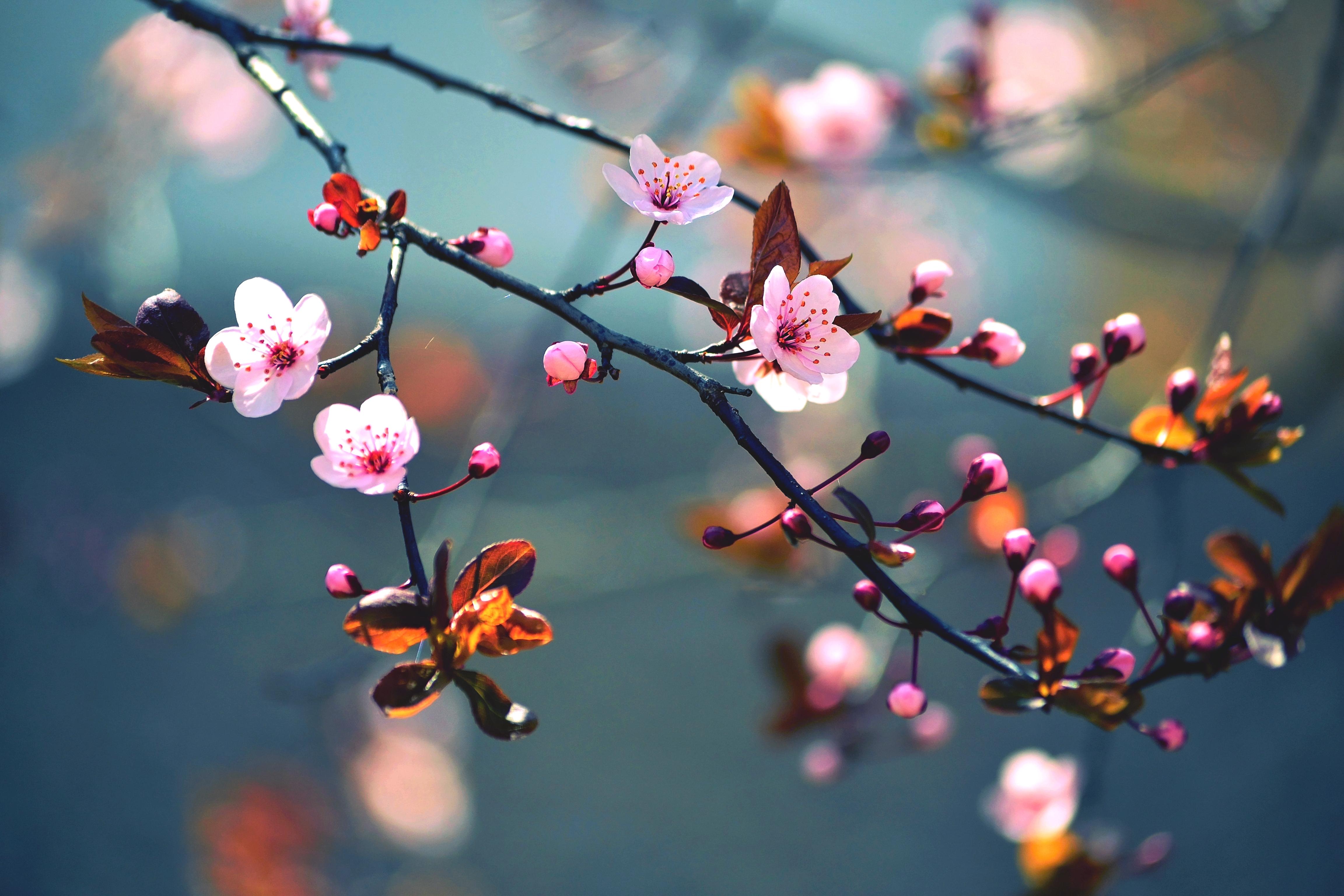 Картинка с весна